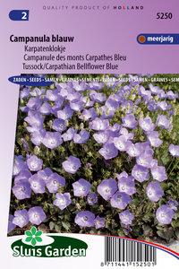 Klokjesbloem enkelbloemig Blauw (Campanula)