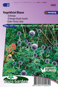 Kogeldistel blauw (Echinops)