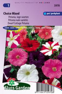 Petunia lage soorten gemengd