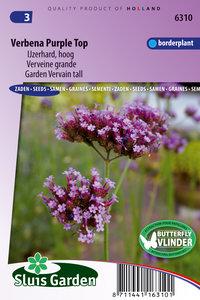 Verbena Purple Top (IJzerhard)