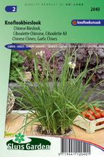 Bieslook-Chinese-(Allium-tuberosum)