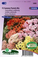 Duizendblad-Summer-Pastels-F2-mix-(Achillea)