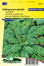 Boerenkool-Halfhoge-groen-gekrulde