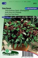 Basilicum-Siam-Queen