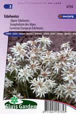 Alpen-Edelweiss