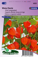 Lampionplant-Winter-Cherrie-(Physalis)