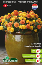 Afrikaan-Strawberry-Blonde
